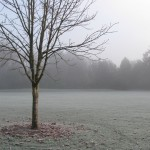 Tree in the Frosty Field